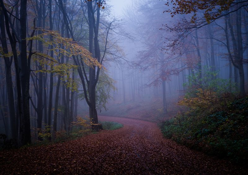 Foggy forestphoto preview