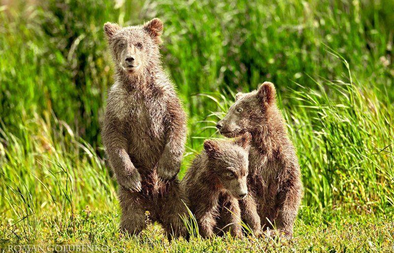 Эй, фотограф, вылезай из кустов, а то маму позову! // Wanna talk to my Mum Buddy?photo preview