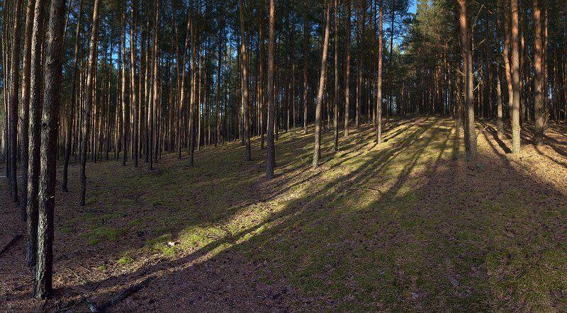 сосны, лес, пригорок Пригорокphoto preview