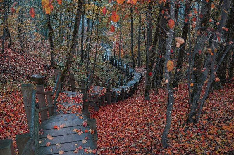 пейзаж осень природа лестница листья природа Тропа через красный лесphoto preview