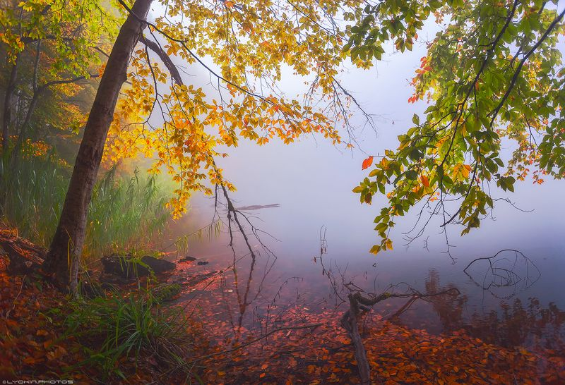 Туман осеннего озераphoto preview