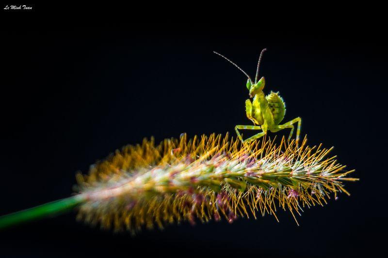mantis The dark knightphoto preview