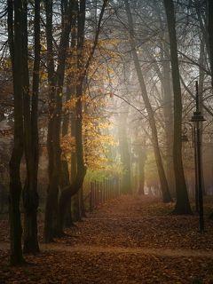 o świcie w miejskim parku
