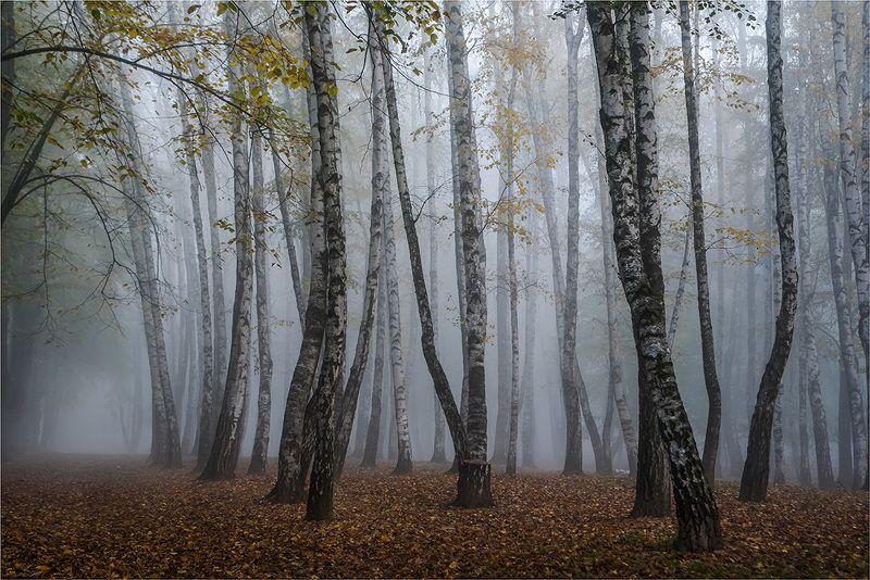 осень, парк, туман. Прогулка в туманеphoto preview