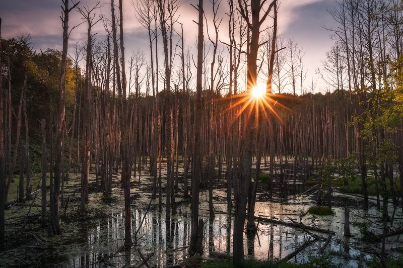 trees swamp sunstar sky water poland autumn Trees die while standing...photo preview