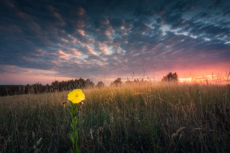 wildflower meadow sunstar sun sky clouds colours mood Alone in the crowd...photo preview