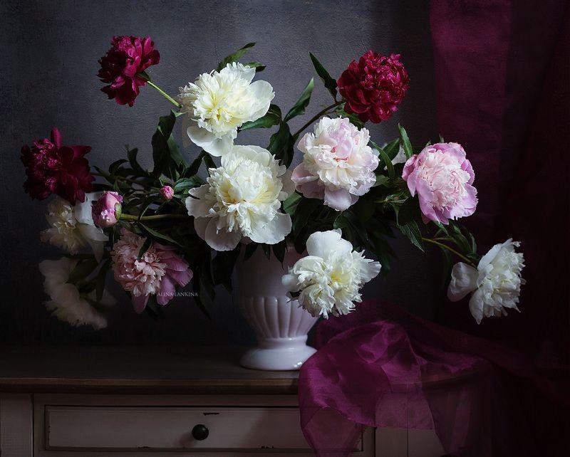 натюрморт, фотонатюрморт, цветы, пионы, свет, тень, лето, алина ланкина ***photo preview