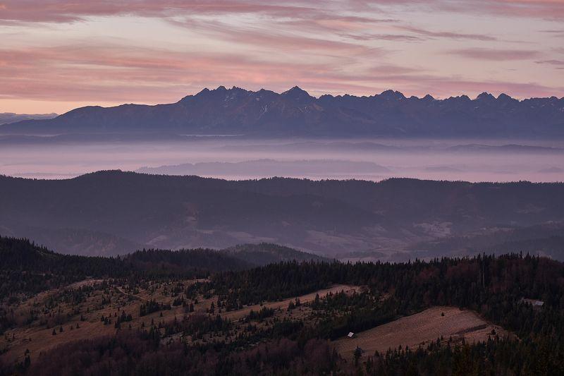 morning,sunrise,sunset,fog,haze,tatras,trees T1photo preview