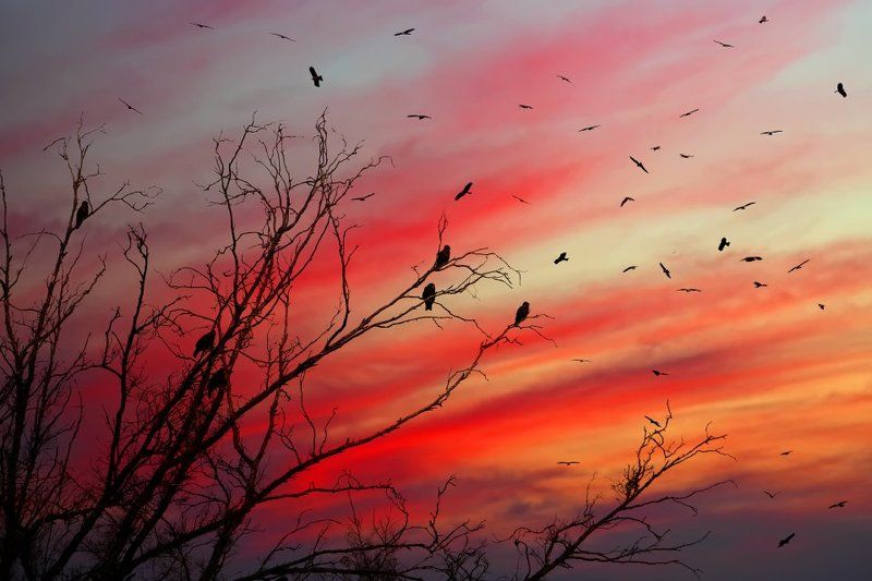 коршун, птица, закат \