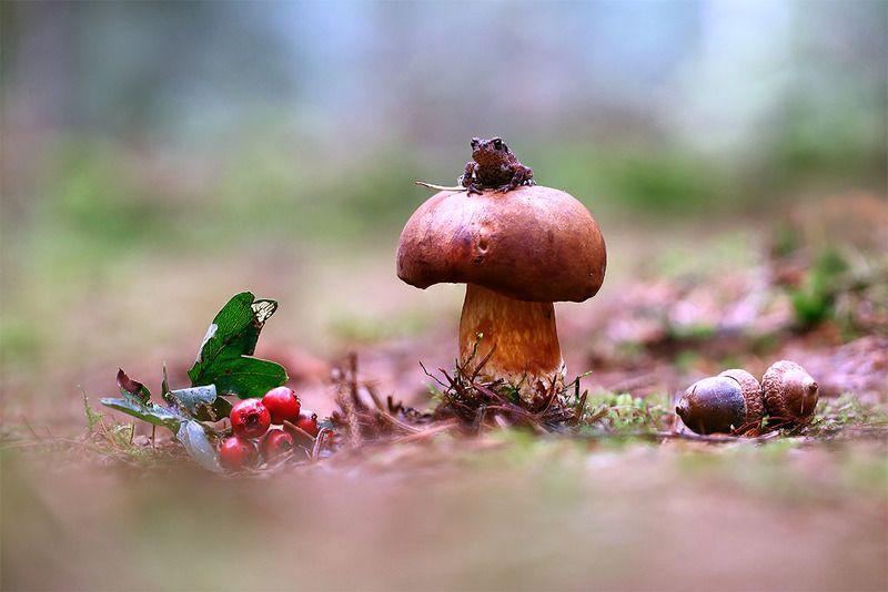 Лес,гриб,лягуха. В ожиданииphoto preview