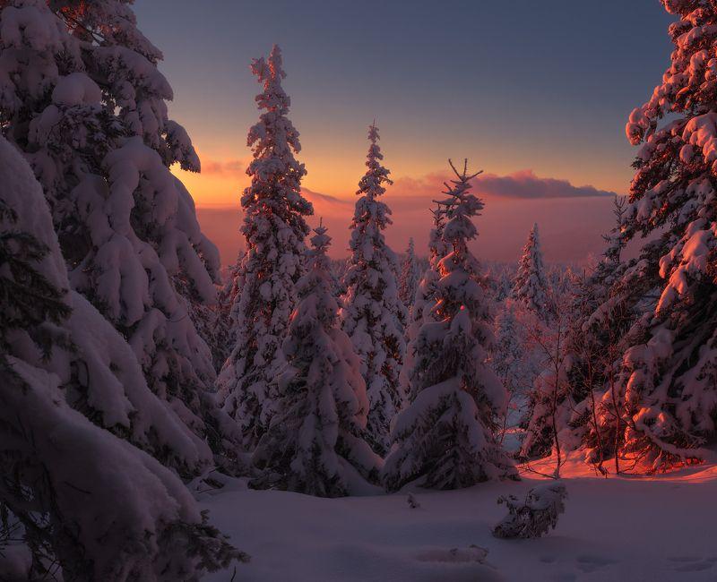 Легенды зимнего лесаphoto preview