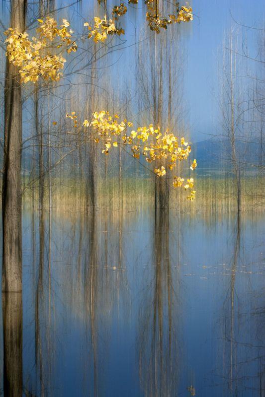 Landscape Golden autumnphoto preview