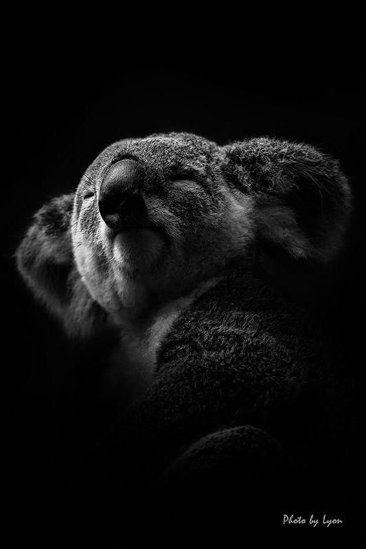 Portraits of animalsphoto preview