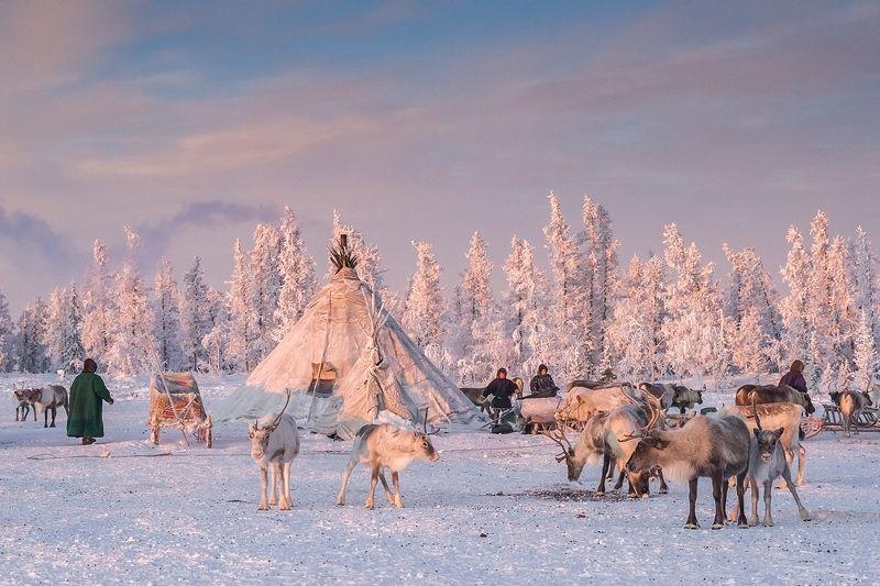 паанаярви, север, карелия, зима Жизнь ненецких оленеводовphoto preview