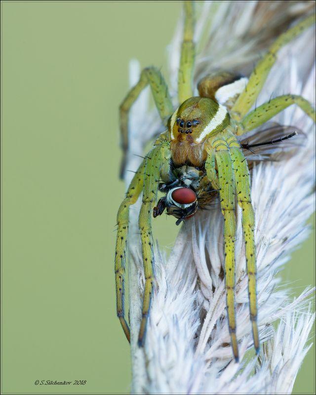 паук муха Первый шаг в мир Макро.photo preview