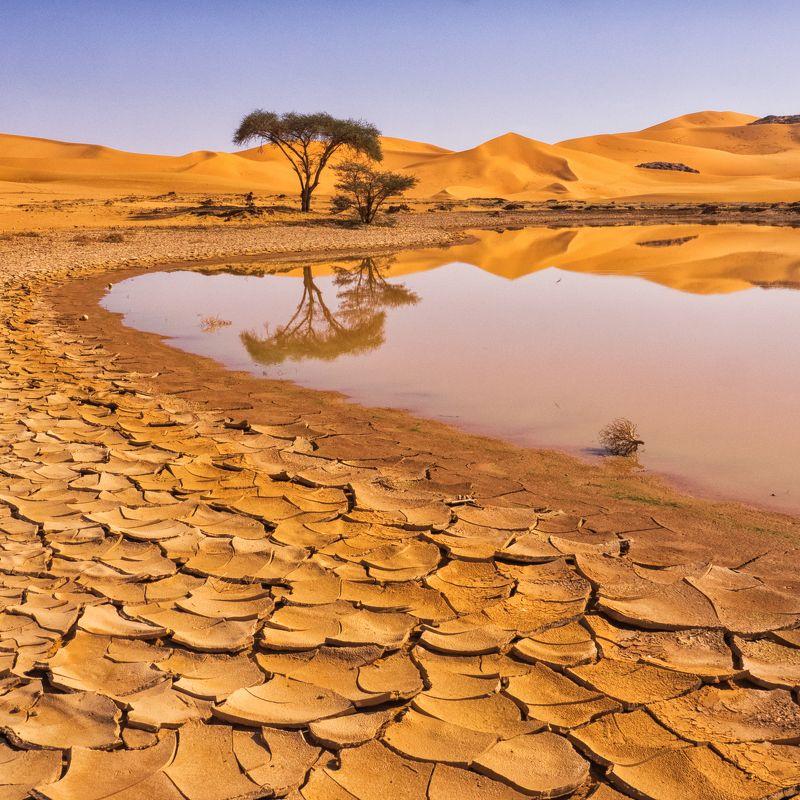 пустыня, оазис, песок, дюны, африка, алжир, сахара, отражение, тадрарт Оазисphoto preview