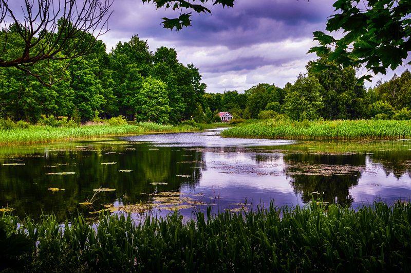 пруда, вода, размышления, лето Спокойствиеphoto preview