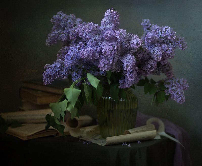 сирень, натюрморт, весна, май, книга, свет, вечер, настроение, алина ланкина, цветы, ваза, букет ***photo preview