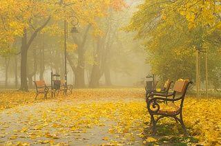 mglisty poranek w parku