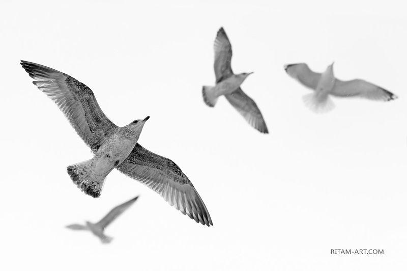 A Bird\'s Dream / И снится птице...photo preview