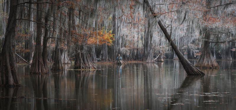 кипарисы, осень, болото, америка Реальный фотограф в нереальном пейзажеphoto preview