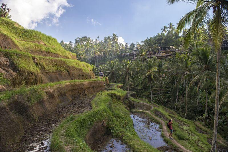 Бали, Индонезия, рис, террасы, экзотика, тропики, фермер, туристы, отдых, путешествие, Тегаллаланг Фотографphoto preview