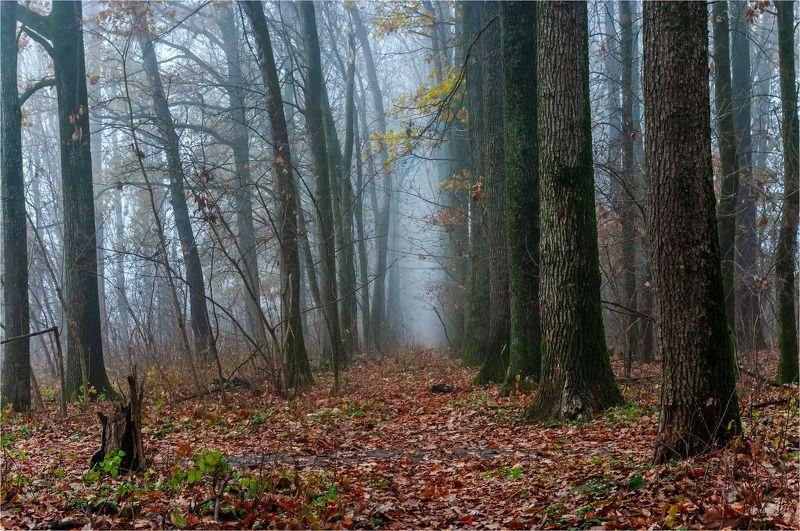 осень, парк, туман. Последний день осениphoto preview