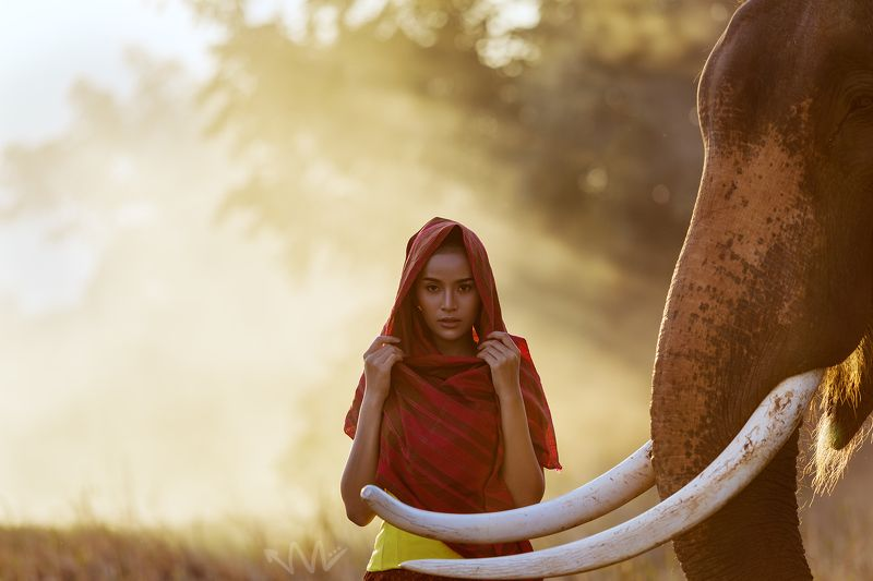 elephant, portrait, thailand, woman Toeyphoto preview