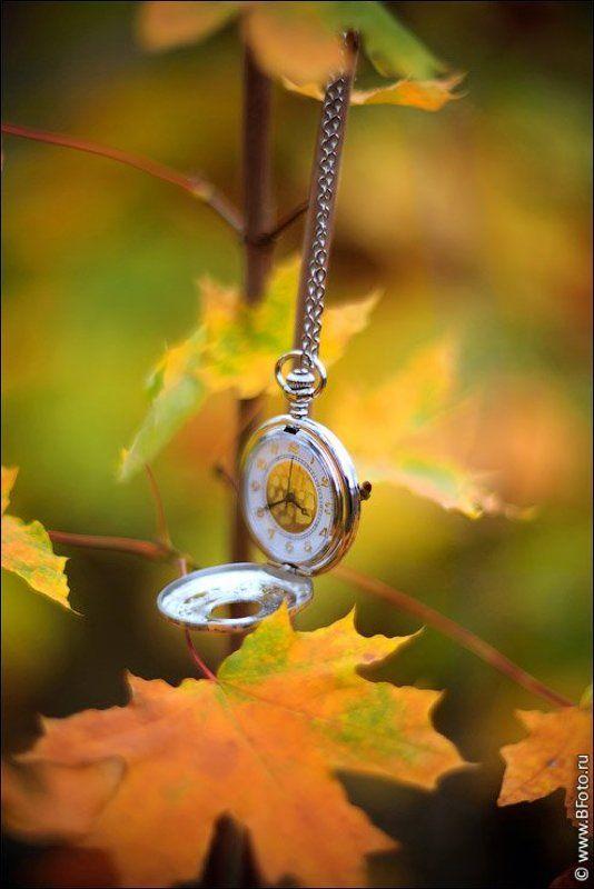 часы, время, осень, гелиос, 40-2 Старинные часыphoto preview