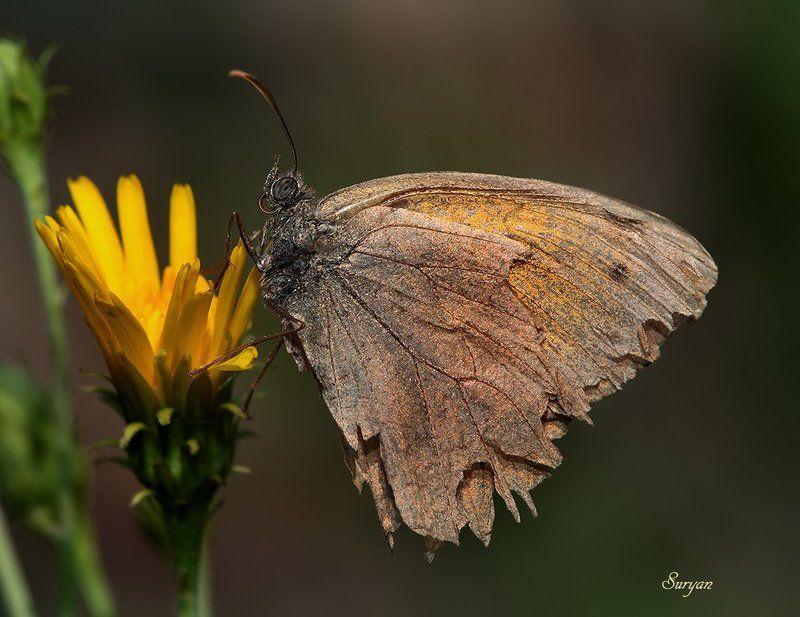 лето, бабочка, цветок — Эй, птичка, летим со мной, там столько вкусного!!photo preview