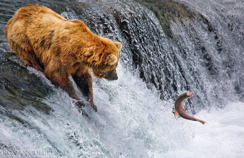 Фэйсконтроль / Facecontrol. Alaskaphoto preview