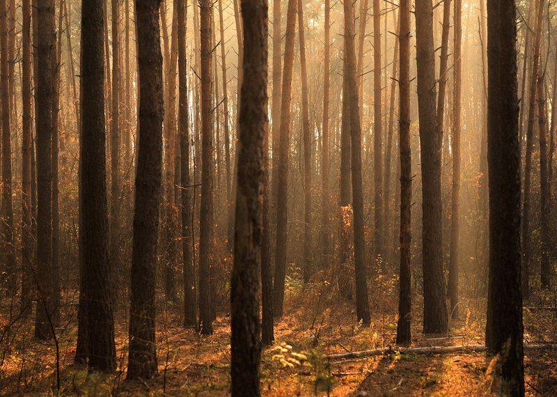 Утро в лесу...photo preview