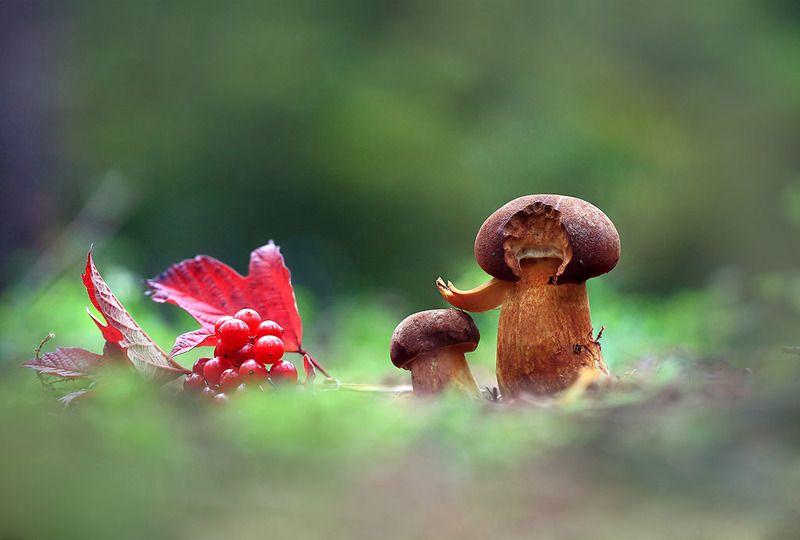 лес,осень,грибы,ягоды. Не бойся я с тобой.photo preview