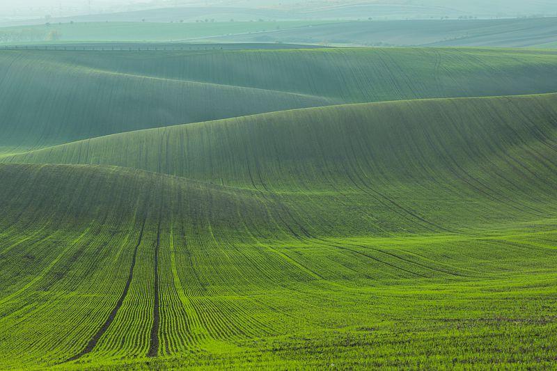 моравия, чехия, озимые, поля, зеленый, осень Зеленые волныphoto preview
