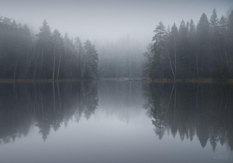 озеро, отражение, туман, ленинградская область, карельский перешеек, лес, ноябрь, осень Туманное озероphoto preview