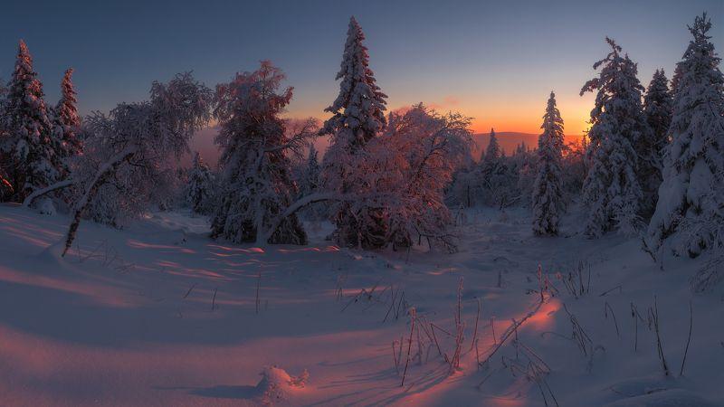 Пробуждение зимыphoto preview