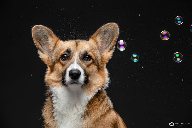 dog photography, dog Scary Shiny Thingsphoto preview