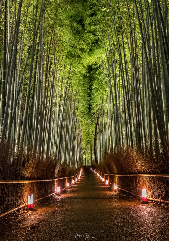 night nature long exposure forest lights kyoto japan bamboo [ Arashiyama Hanatouro Festival ] Kyoto, Japan.photo preview
