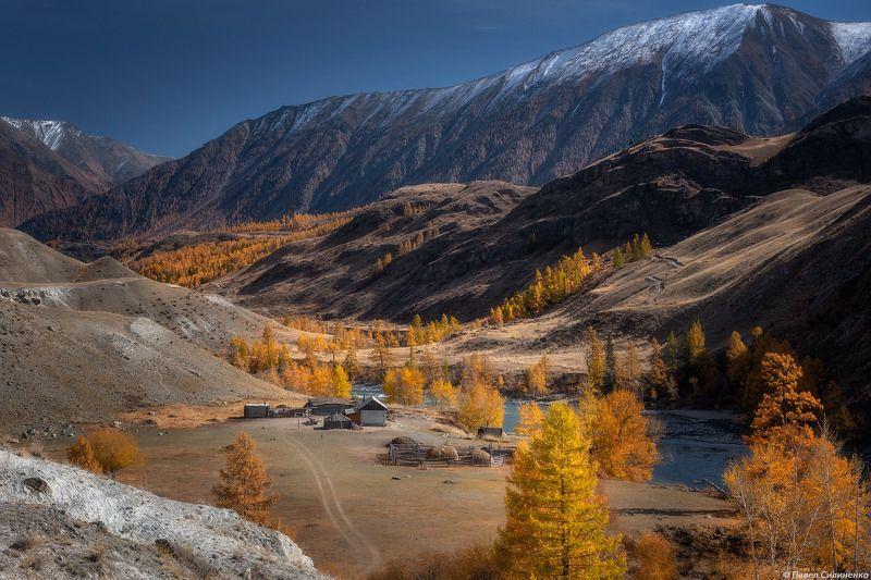 пейзаж, осень, горы, аргут, река, алтай, желтый, свет, лиственница На берегу Аргутаphoto preview
