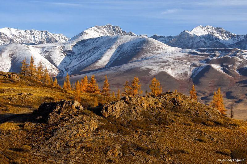 алтай, altai, осень, autumn, горы, mountains Алтайское утроphoto preview