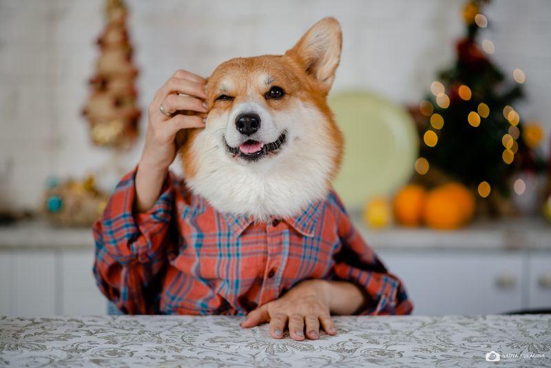 dog, pup Как? Новый год уже на носу???photo preview