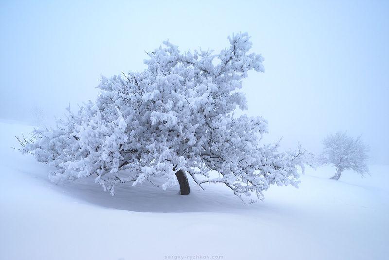 карпаты, украина, природа, зима, дерево, пейзаж, туман, fog, carpathians, ukraine, nature, landscape, winter, ***photo preview