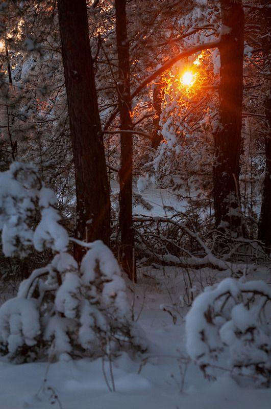 закат лес в снегу \