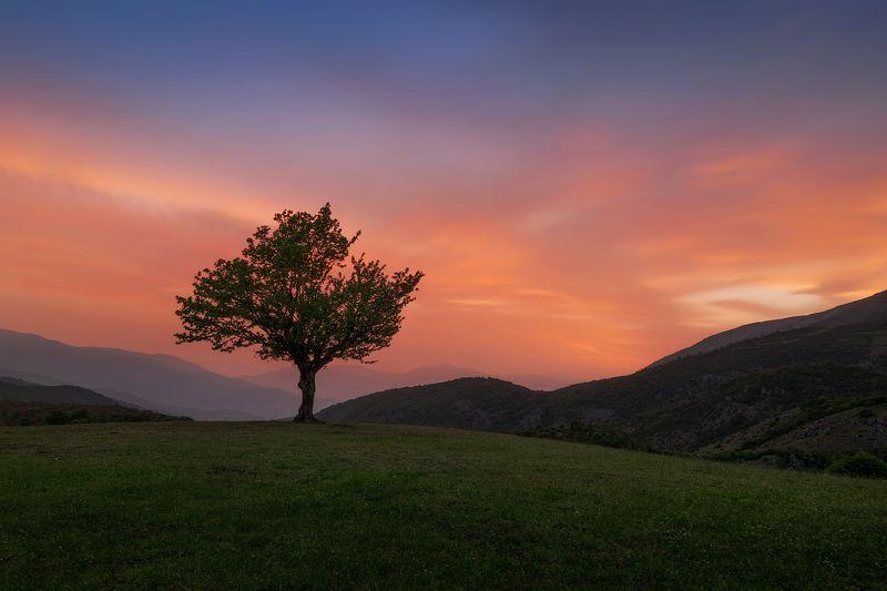 landscape tree color Treephoto preview