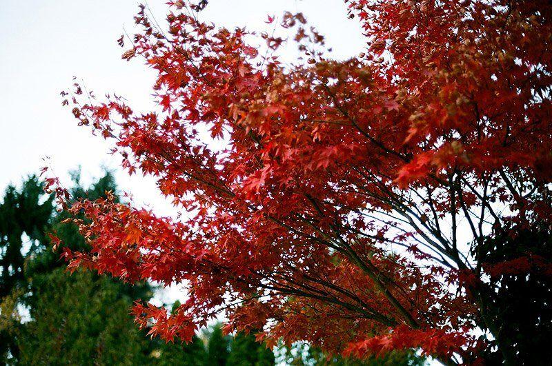 природа, осень, пленка Игра цветаphoto preview