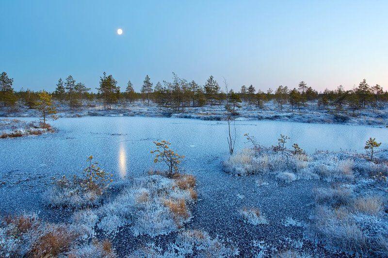 луна, болото, сумерки Луна и болотоphoto preview