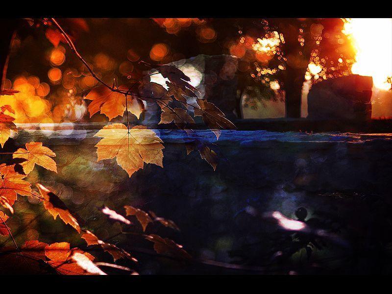 autumn, light autumn dreamsphoto preview