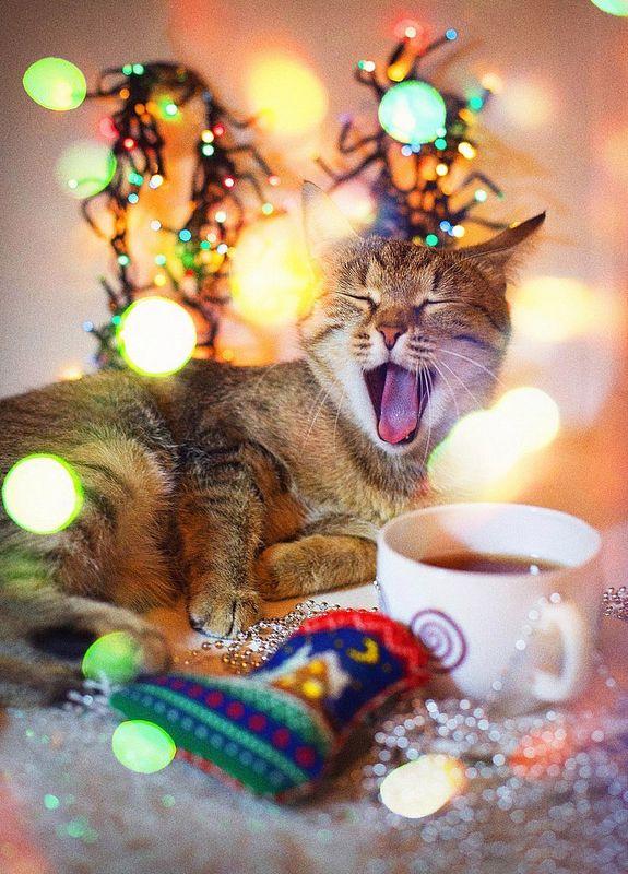 новый год, кошка, буська, праздник, огни, радость С наступааающиим...!!!! ;)photo preview