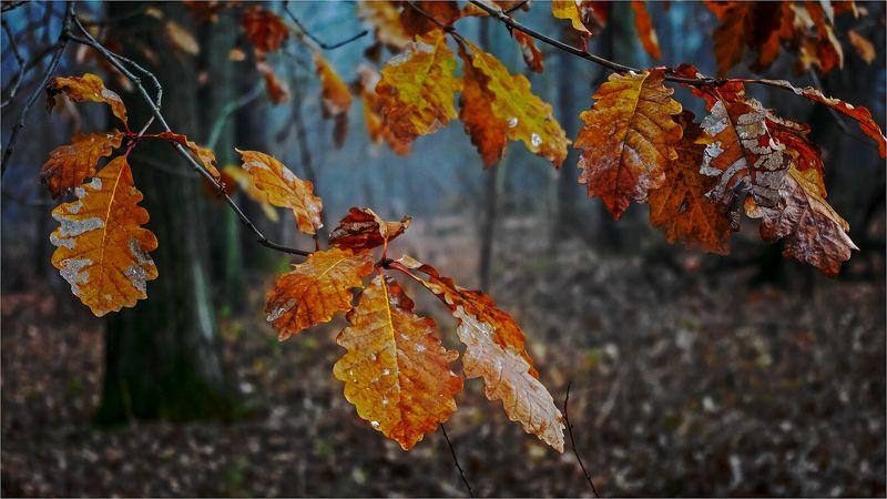 осень, листья Остатки осениphoto preview