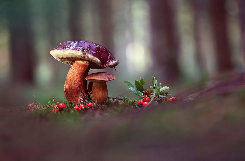 Лес,осень,грибы. Я тебя закрою от холодного дождя.photo preview